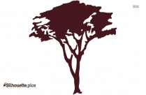 Tree Clear Background Silhouette