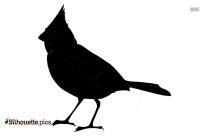 Short Beak Bird Silhouette Wallpaper
