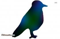 Cardinal Bird Pictures Silhouette