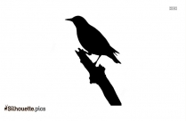 Bird Sitting At The Edge Of A Branch Silhouette