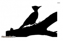 Woodpecker Sitting In Branch Images Silhouette