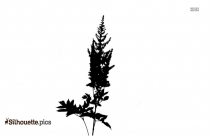 Agave Plant Silhouette Image