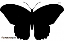 Black Most Beautiful Butterfly Silhouette Image