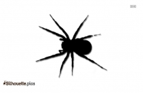 Black And White Common House Spider Silhouette