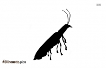 Black And White Firefly Bug Silhouette