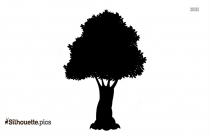 Green Walnut Tree Silhouette