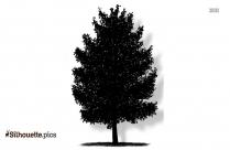 Magnolia Tree Silhouette Picture