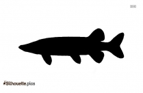 Muskellunge Silhouette Picture