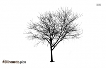 Willow Tree Drawing Silhouette Free Vector Art