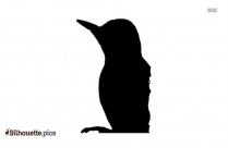 Woodpecker Sitting On Branch Silhouette Picture,image