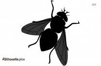 Black House Fly Silhouette Image