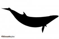 Black Minke Whale Silhouette Image