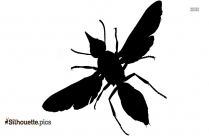 Beetle Silhouette Image And Vector Art