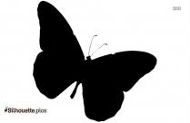 Beautiful Butterfly Drawings Silhouette