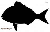 Shark Silhouette Vector And Graphics