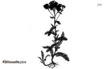 Black Yarrow Flower Silhouette Image