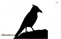 Robin Bird On Branch Silhouette