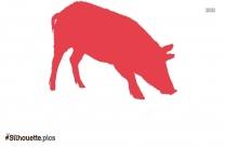 Black Pig Silhouette Image