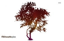 Tree Sketch Silhouette
