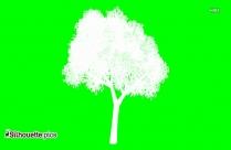 Brazilian Pepper Tree Silhouette