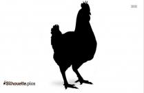 Broiler Chicken Picture Silhouette