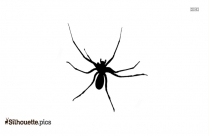 Brown Recluse Silhouette Drawing