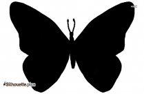Butterfly Drawings Silhouette Vector
