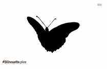 Butterfly Silhouette Vector And Graphics