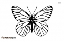 Butterfly Drawings Clipart Image