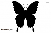 Butterfly Silhouette Vector And Graphics Vector