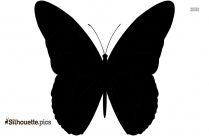 Cartoon Fly Silhouette Image And Vector, Insect Sign