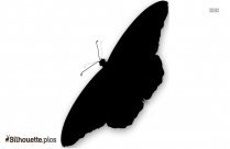Butterfly Wings Drawings Silhouette Icon