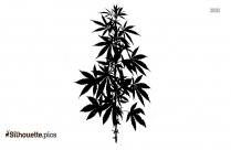 Cannabis Leaf Silhouette Illustration