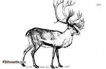 Caribou Drawing Clip Art Silhouette