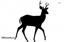 Baby Deer Silhouette Vector And Graphics