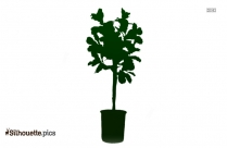 Fig Tree Leaf Silhouette Picture