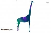 Black And White African Giraffe Silhouette