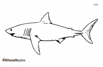 Shark Drawings Silhouette Illustration