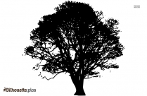 Free Bare Tree Silhouette Download