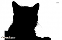 Cat Drawing Silhouette Image And Vector