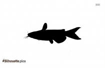 Largemouth Bass Silhouette Image
