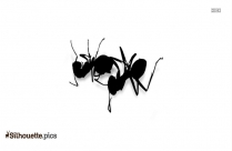 6 Legged Spider Silhouette Vector And Graphics