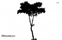 Artocarpus Altilis Tree Silhouette