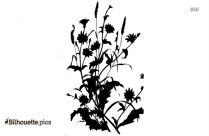 Chicory Plant Silhouette Free Vector Art
