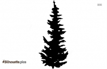 Evergreen Tree Silhouette Image And Vector