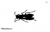 Cicada Killer Wasps Burrow Silhouette