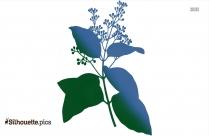 Cinnamon Plant Silhouette