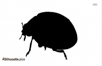 Clip Art Ladybird Silhouette