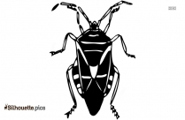 Cockroach Drawing Silhouette