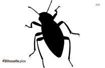 Cockroach Silhouette Image And Vector